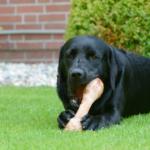 Ossa ricreative per cani: tutto quello che c'è da sapere